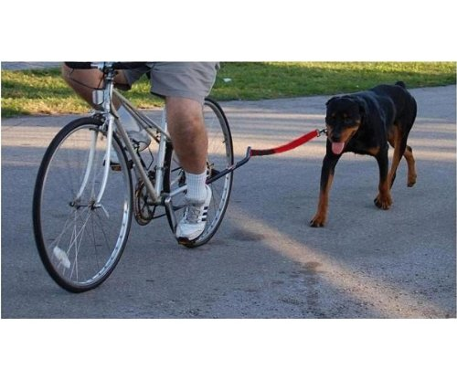 K9 Cruiser Bicycle Leash