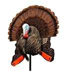 MOJO Outdoors Scoot and Shoot Turkey Decoy - Hunting Accessories, Turkey Hunting, Multi, Model: HW2426