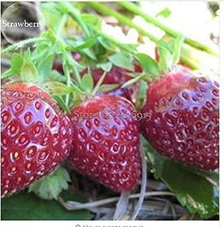 Best purple wonder strawberry seeds Reviews