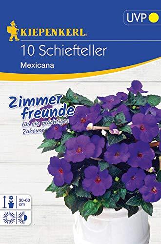 Schiefteller Mexicana Achimenes-Hybriden, ausdauernde blütenreiche Zimmerpflanze mit ovalen dunkelgrünen Blättern