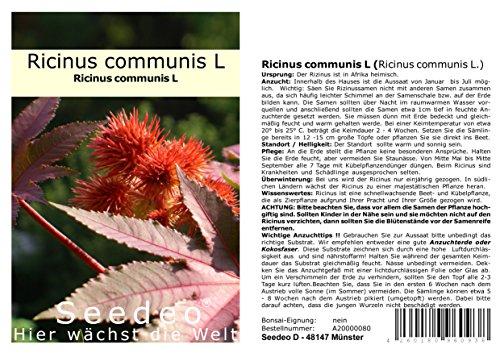 Seedeo® Ricinus (Ricinus communis) 15 Samen