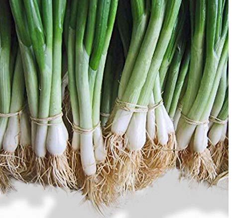 He Shi Ko Bunching Onion Scallions 200 Seeds...