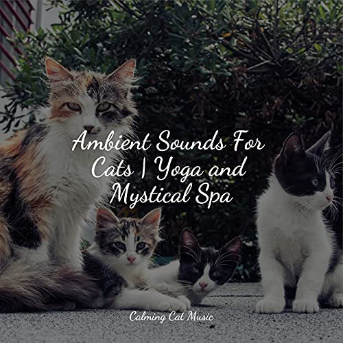 Jazz Music for Cats, Music for Cats Project & Music for Pets Library
