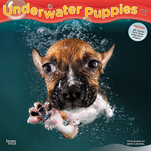 Underwater Puppies 2020 12 x 12 Inch Monthly Square Wall Calendar, Pet Humor Puppy (English, French and Spanish Edition)