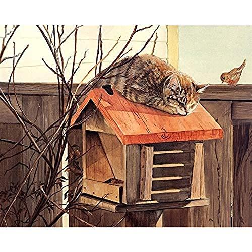 JFZJFZ DIY digitaal canvas olieverfschilderij cadeau voor volwassenen kinderen schilderen op nummer kits Home House Decor - Vogels en slapende katten 40x50 cm