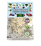 Clark&Co Organic 150 Live Ladybugs - Good Bugs for Garden - Pre-Fed Hippodamia...