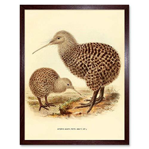 Wee Blauwe Coo Tekenen Vogel Rowley Keulemans Gespot Kiwi Family Art Print Ingelijste Poster Muurdecoratie 12X16 Inch