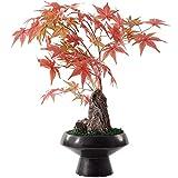 hanxiaoyishop Bonsai Artificial Arce Artificial Bonsai Bonsai Fake Plant Sala de Estar Decoración Interior Simulación Árbol Puerta Potted Plant Ceramic Flowerpot Home Office Planta Artificial