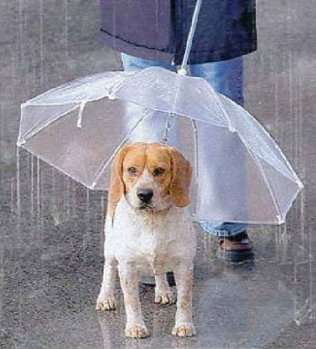 ペット用 傘 小型犬〜中型犬くらいまで わんちゃんお散歩用傘 雨の日の散歩も大喜び♪