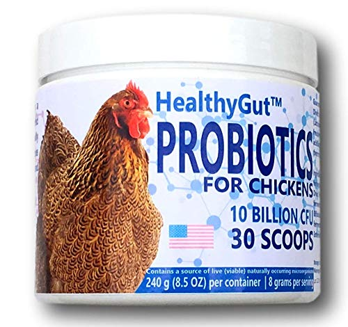 HealthyGut Probiotics for Chickens and Poultry | 1 Scoop per 10 Chickens (240 Grams | 300 Servings)