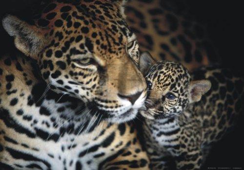 XXL Poster Fototapete Leopard Wildniss Safari Panther 160cmx115cm