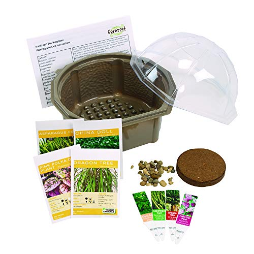 Fern Root Grow Your Own Rainforest Eco-biosphere Terrarium - Kit is Easy to Grow...