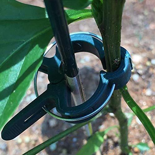 Six6 30 Clips Gran jardín, Clip del Pepino del Tomate Rama de jardinería Fija Planta de plástico Tomate Berenjena Colgando de semillero Clip Clip injerto