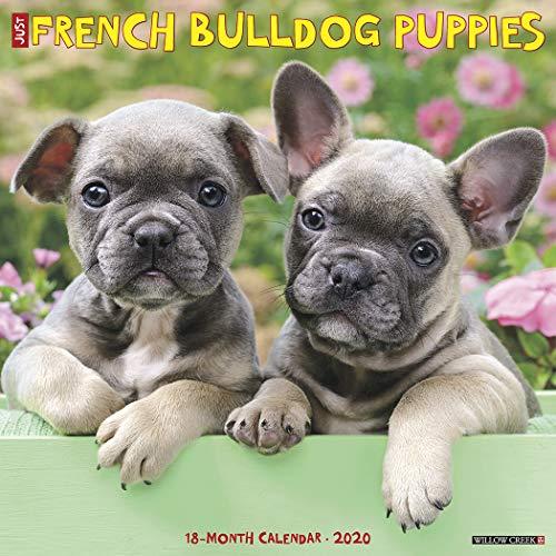Just French Bulldog Puppies 2020 Wall Calendar (Dog Breed Calendar)