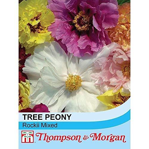 Potseed Thompson & Morgan Paeonia Rockii Mixed (Baum-Pfingstrose) Samen