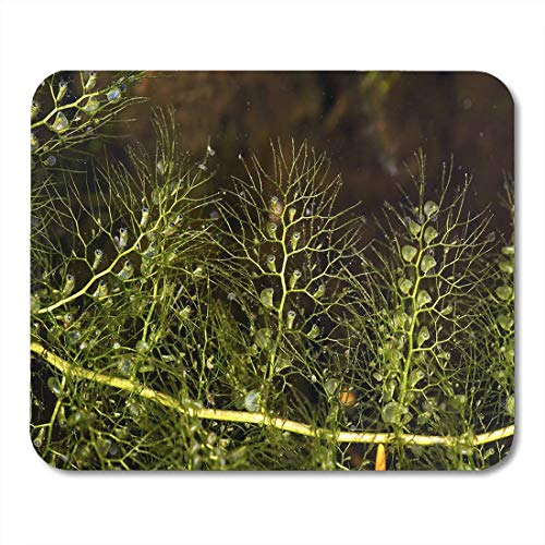 Mauspads nahaufnahme von blasenkrautblatt utricularia vulgaris fleischfressende pflanze bei mauspad für notizbücher, Desktop-computer-matten büromaterial
