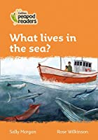Level 4 - What lives in the sea? (Collins Peapod Readers)