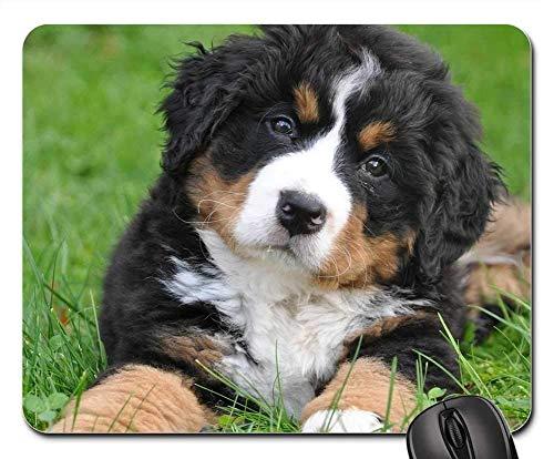 Gaming-Mauspads, Mäusematte, Berner Sennenhund Hund Big Dog Animal Green 4