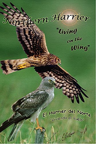 'Northern Harrier, Living on the Wing' Wildlife Video DVD Birds of Prey Raptors Hawks
