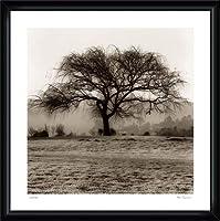 ポスター アラン ブラウステイン Willow Tree 額装品 ウッドハイグレードフレーム(ブラック)
