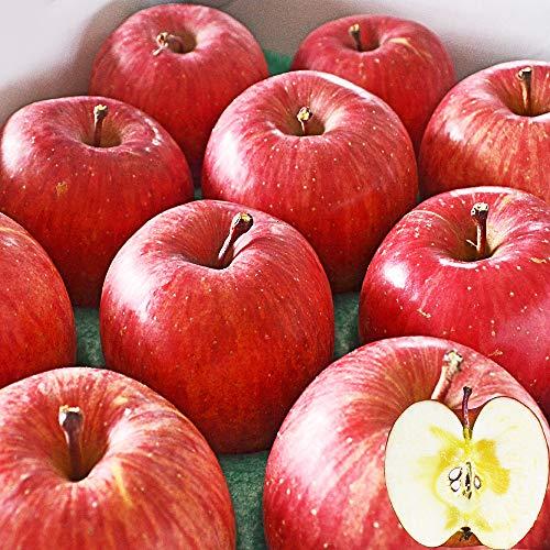 山形県産 完熟 サンふじりんご 3kg 約12玉前後