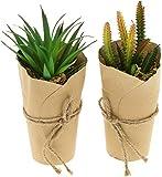 com-four® 2x Plantas artificiales [la selección varía], plantas decorativas engañosamente reales en jarrón de papel, plantas artificiales para el hogar, jardín, balcón y oficina (02 piezas - talla XL)