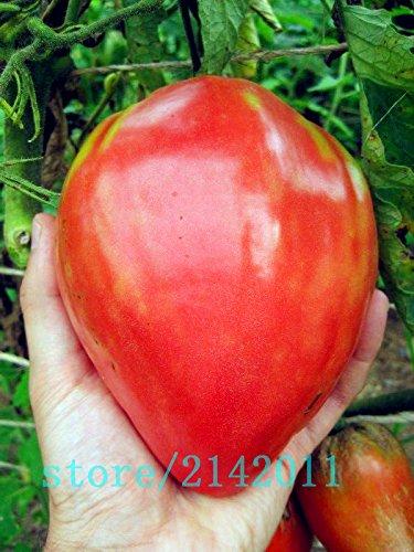 Heirloom géant Graines de tomates rouges, les graines de tomates, fraises Paquet professionnel, 100 graines / Pack, usine de légumes bio pour le jardin de la maison