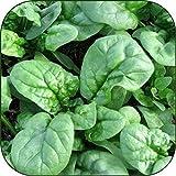 Organic Bulk Spinach...image