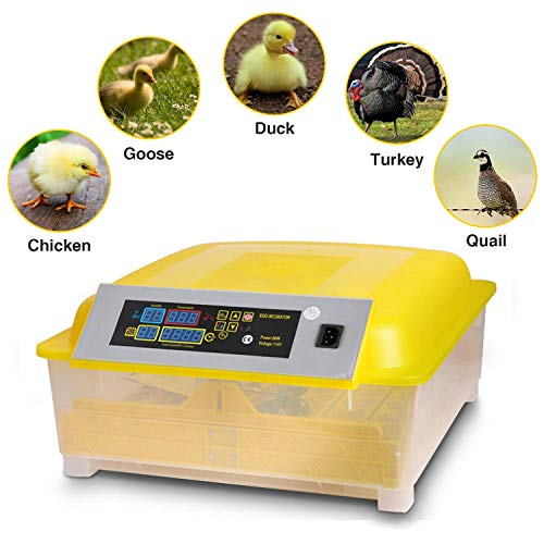 Noeler Egg Incubator Digital Automatic Incubators with Egg Turning,Chicken Duck Goose Quail Birds Fertile Eggs for Hatching (48 Egg Incubator)