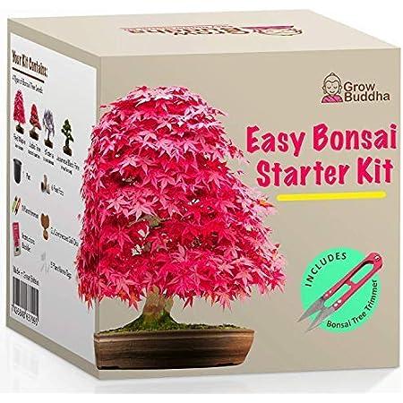 Kit Haga crecer su propio Bonsái - Cultiva fácilmente 4 tipos de árboles Bonsái con nuestro kit de semillas de Bonsái completamente para principiantes - Kit de semilla, Idea única de regalo