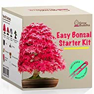 Grow Your own Bonsai kit