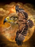 5D diy Nuevo Diamante Pintura Alas de águila Bordado de diamantes Punto de cruz Diamante de imitación Mosaico Cubo de Pai Imagen de taladro Diamante redondo 40x50cm