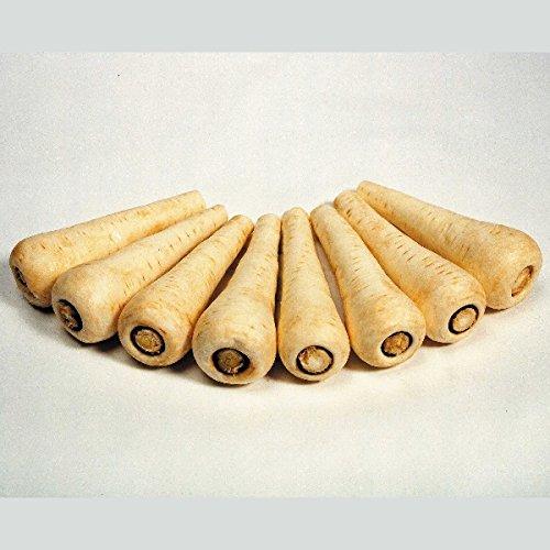 Panais - Comtesse - 350 Graines