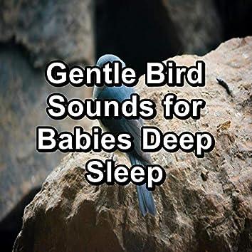 Gentle Bird Sounds for Babies Deep Sleep