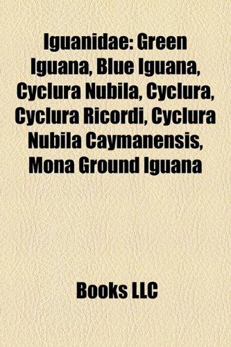 Iguanidae: Green Iguana, Blue Iguana, Cyclura nubila, Cyclura ricordi, Mona Ground Iguana, Rhinoceros Iguana, Cyclura nubila caymanensis