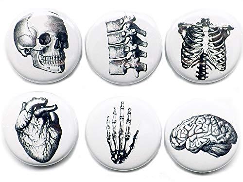 Set of 6 Anatomy MAGNETS 1 Inch Brain Skull Anatomy Hand Anatomical Heart Vertebrae Human Body Geekery Skeleton stocking stuffer party favor med student gift