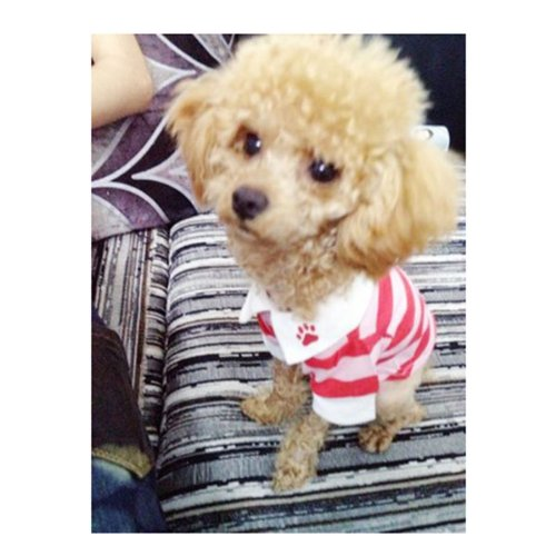 HuntGold 100% design de mode en coton rayé coloré t-shirt pour chien(rouge Taille: S)