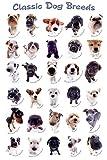 Empire 708939Perros–Classic Dog Razas–Póster–Póster de Animales (tamaño 61x 91,5cm