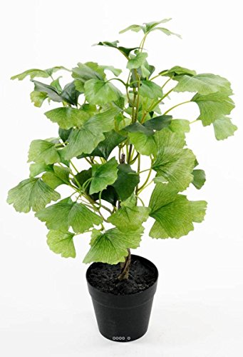 Artificiales Ginkgo Biloba Planta Maceta H 45 cm Tres densa