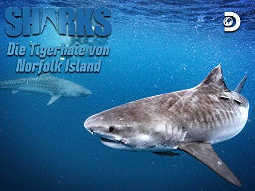 Die Tigerhaie von Norfolk Island