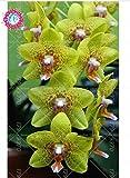 Semillas de flores de orquídeas 100PCS-semilla para las semillas de orquídea Phalaenopsis jardín casa para estudiar en casa de compra-directo desde China-orquidea semente 15