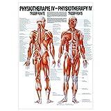 Sport-Tec Triggerpunkte Poster Anatomie 70x50 cm