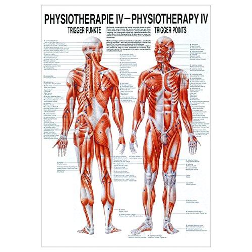 Sport-Tec Triggerpunkte Poster Anatomie 70x50 cm medizinische Lehrmittel