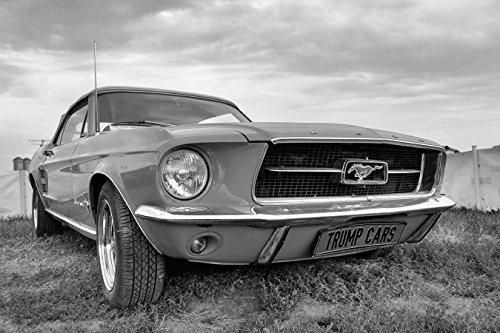 Bilderdepot24 Fototapete selbstklebend Mustang - schwarz weiß 135x90 cm