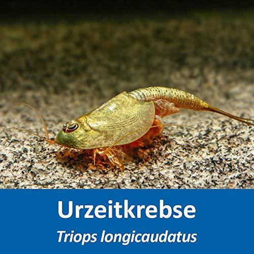 AQ4Aquaristik Triops longicaudatus - Urzeitkrebse - ca. 50 bis 250 Triops Eier - mit Anleitung