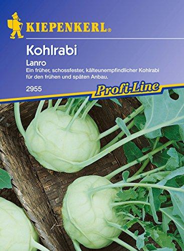 Sperli Gemüsesamen Kohlrabi Lanro, weiß/grün