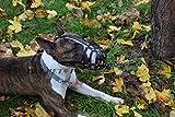 Champion Bozal de perro de cuero ligero para Bull Terrier inglés y otros snou similares