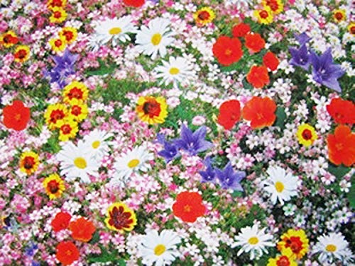 nulala 200pcs Wild Flower Seed Mixed Flower Garden Plant Seed Short Height Wildflowers Mix Seeds