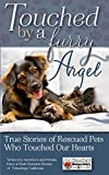 Touched By A Furry Angel (English Edition)