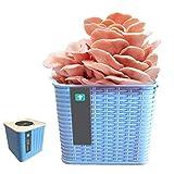 FCCD Kit de cultivo de hongos pequeños, bolsa de esporas de desove de micelio de hongos ostra orgánicos, kit completo para cultivar hongos comestibles en interiores rápidamente, hongo ostra azul, rosa